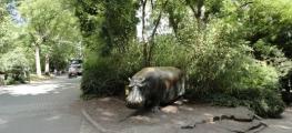 Besuch im Zoo - 2013