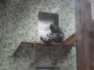 ZoobesuchDSC01091